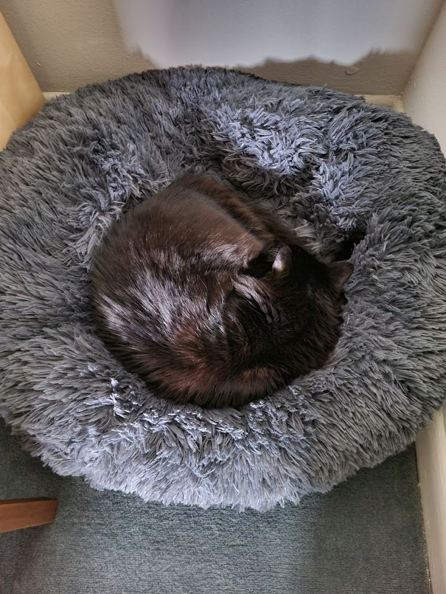 Cat curled up in bed asleep